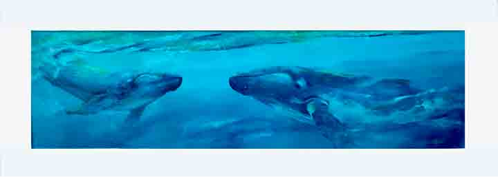 Sandra Meiland • Snorkeling with whales in Tonga